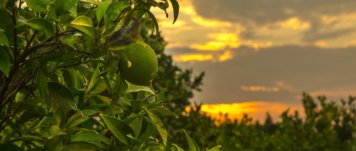 arancia al tramonto